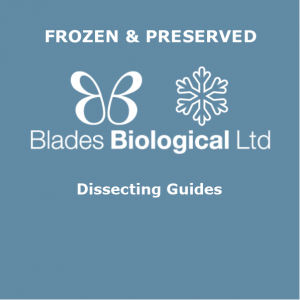 Dissecting Guides