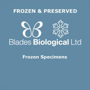 Frozen Specimens