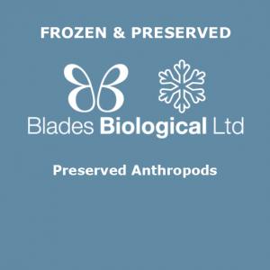 Preserved Anthropods