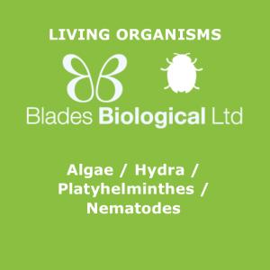 Algae / Hydra / Platyhelminthes / Nematodes