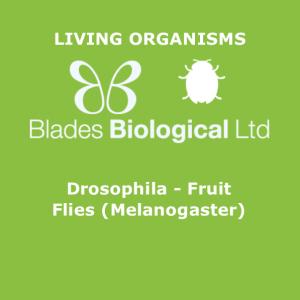 Drosophila - Fruit Flies (Melanogaster)