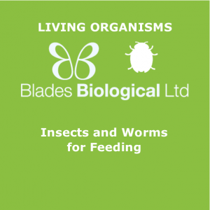 Insects and Worms for Feeding