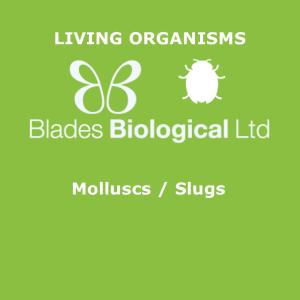Molluscs / Slugs